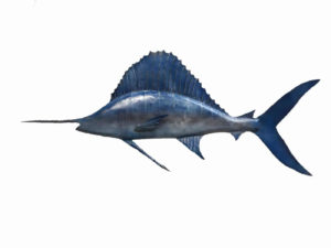Handmade Metal Atlantic Sailfish Sculpture